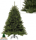 Ель Лесная красавица  (Forest Frosted Pine) 230м