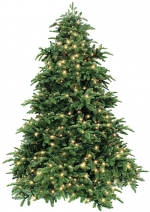 Triumph Tree ������������� ��� ��������� 215 �� (� ���������) ���. o-389707/73696