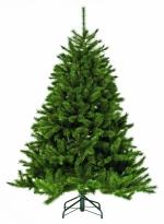 Ель Лесная красавица стройная 425 см