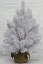 Ель Исландская белоснежная 90 см (в мешочке)