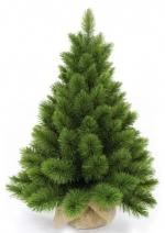 Triumph Tree ������ ������ �� ���� � ������� 60 �� ���. o-475369/73698