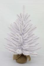 Ель Исландская белоснежная 60 см (в мешочке)